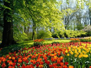 cool_hd_spring_wallpapers